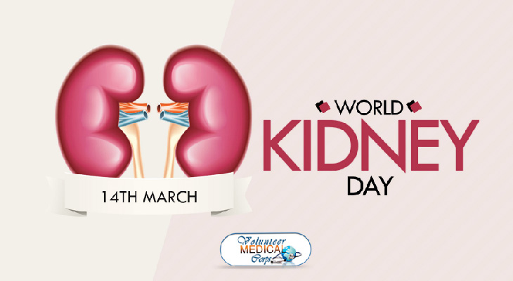 Fun Facts about the Kidneys